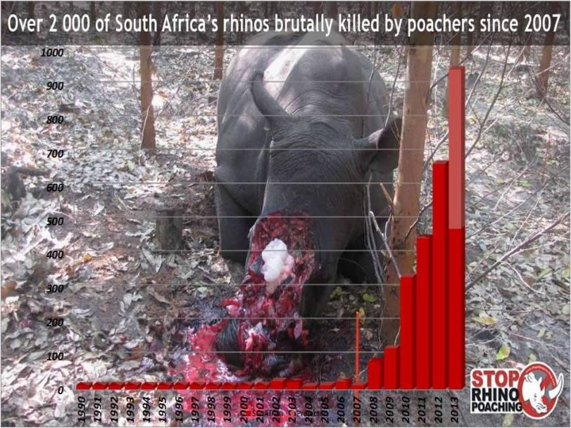 Rhino statistics slide 06 07 13